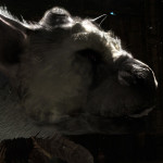 E3 2015: The Last Guardian Coming in 2016